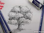آموزش اسکیس درخت 1